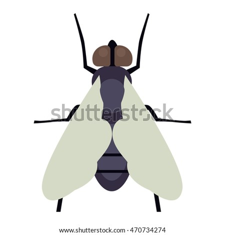 House fly insect and cartoon black fly insect