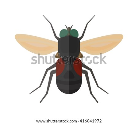 house fly insect and cartoon