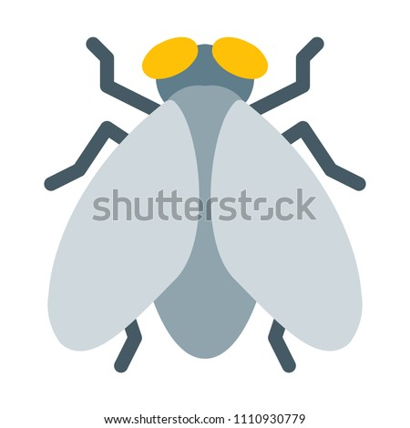 House Fly or Bug