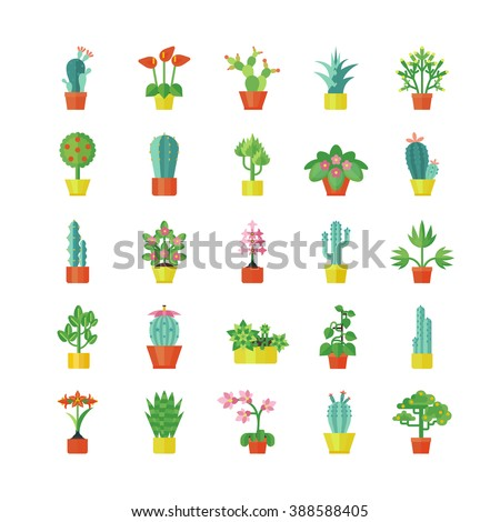 house plants and flowers for