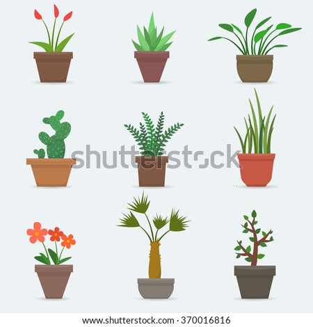 house plants and flowers in