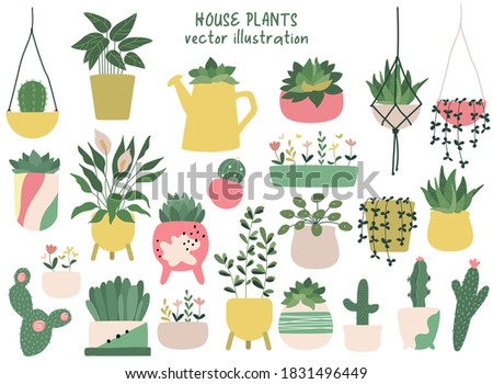House plants hand drawn clipart set. Indoor plants in pots - peace lily, succulent, aloe vera, cacti, ficus and calathea. Home decorations and interior design elements. Flat. Scandinavian style.
