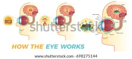 how the eye works three