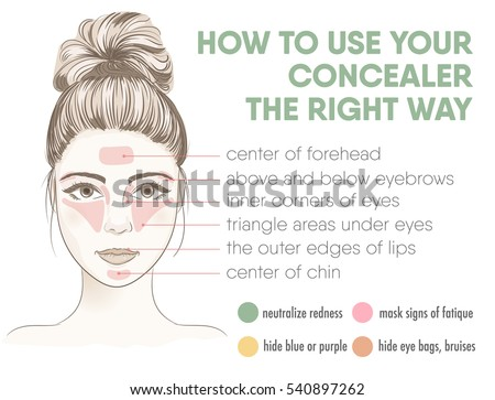 How to apply your concealer the right way infographic chart. Vector illustration with makeup and