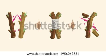 How to Graft Trees, How to Transplant Trees Stockfoto ©