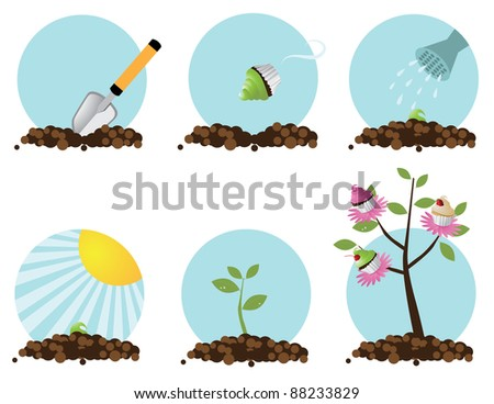 how to grow a cupcake tree step