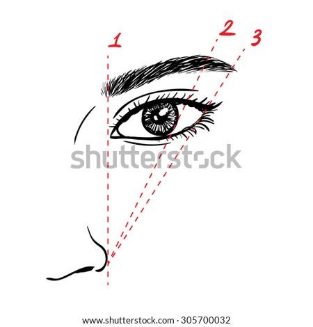 How to paint the eyebrows. Vector trendy makeup scheme.