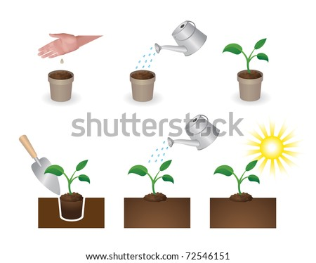 How to put plants. The instruction in pictures