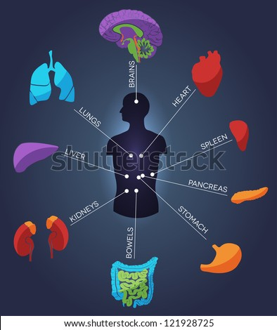 human anatomy abstract