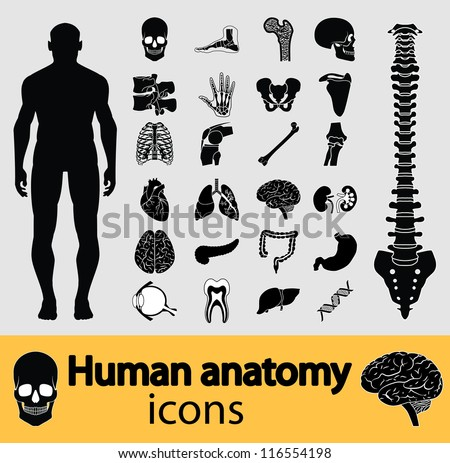 Human anatomy black & white icon set. Vector illustration. stock photo