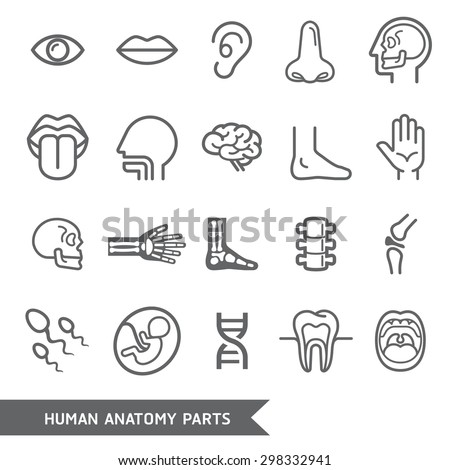 human anatomy body parts