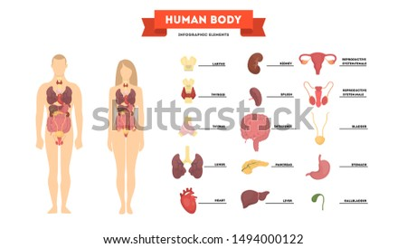 Human anatomy concept. Female and male body with set of internal organ. Intestine, heart, liver and stomach. Medicine and science concept. Isolated vector illustration in cartoon style