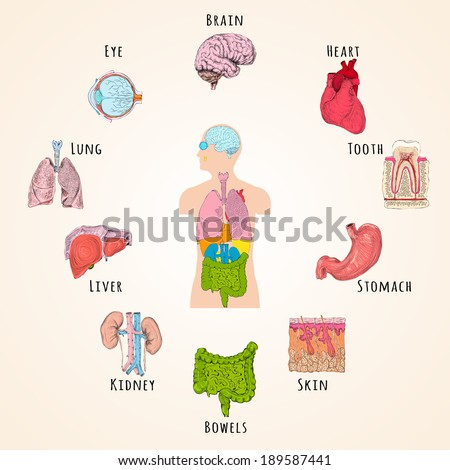 human anatomy concept with body