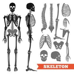 Human anatomy flat monochrome set with skeletons and single bones isolated on white background vector illustration