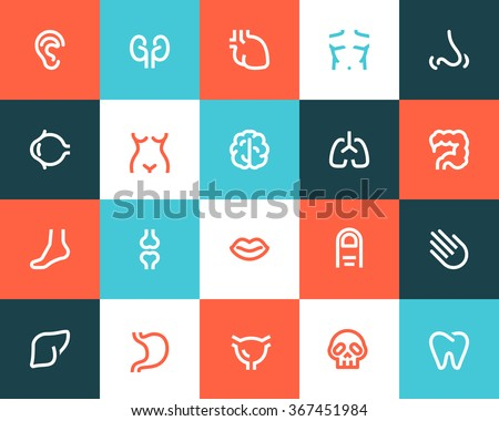 human anatomy icons flat style