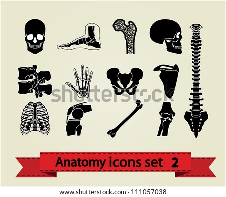 Human anatomy icons parts.