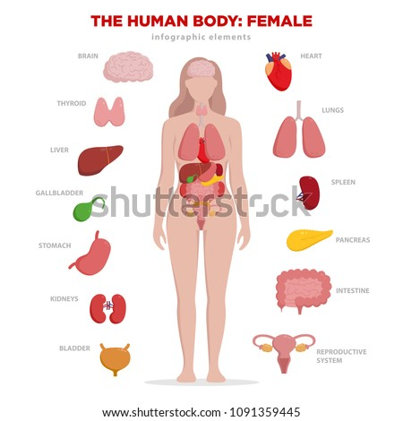 Human anatomy infographic elements with set of internal organs isolated on white background and placed in female body. Woman reproductive organs with girl silhouette and icons around.