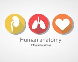 Human anatomy. Infographics icons.EPS 10 file.