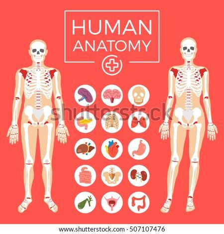 human anatomy man and woman