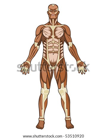 Human anatomy medical concept illustration in vector
