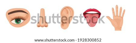 Human anatomy organs set, biology, body structure. Human organs. Nose smell, eye sight vision, ears, skin touch, body, language taste of tongue. Perception of environment, sensations cartoon vector