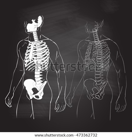 human body and skeleton with