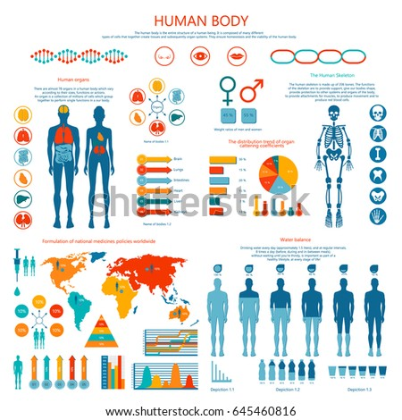 human body infographic vector