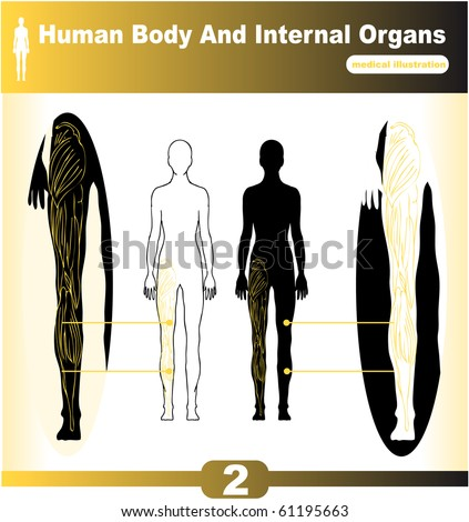 organs of human body. stock vector : Human Body