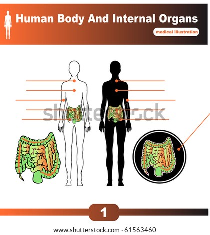 organs of human body. organs of human body. stock