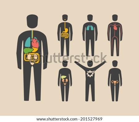 Human body organs