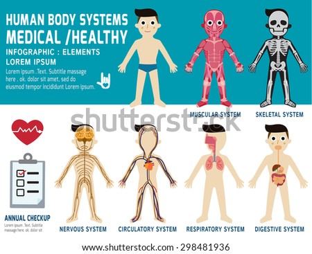 human body systems  annual