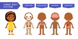Human body systems educational kids banner flat vector template. Illustrated cute anatomy, internal organs structure for children. Cartoon skeleton, circulatory, nervous, digestive systems