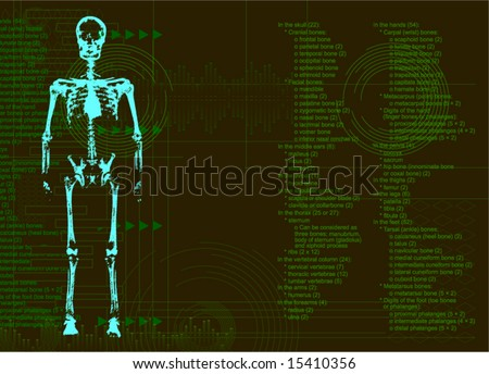 Human Body X Ray (The list of bones of the person)