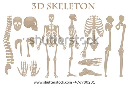 Human bones 3d realistic vector skeleton silhouette collection set. High detailed helloween illustration stock photo