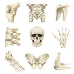 Human bones icons detailed photo realistic vector set
