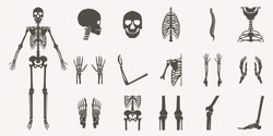 Human bones orthopedic and skeleton silhouette collection set on white background, bone x-ray image of human joints, anatomy skeleton flat design vector illustration.