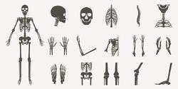 Human bones orthopedic and skeleton silhouette collection set on white background, bone x-ray image of human joints, anatomy skeleton flat design vector illustration.