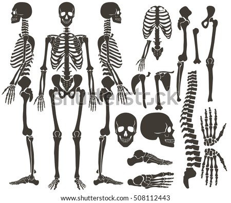 skeleton and bones vector set - download free vector art, stock, Skeleton