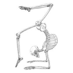 Human bones skeleton drawing. Dancing or doing gymnastic. With arms, legs, skull. Sport vector illustration.