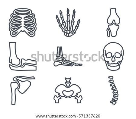 human bones skeleton line icon Foto d'archivio ©