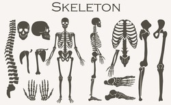 Human bones skeleton silhouette collection set. High detailed Vector illustration.