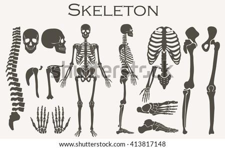 human bones skeleton silhouette