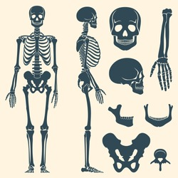 Human bones skeleton silhouette vector. Bone set, illustration spine and skull bones