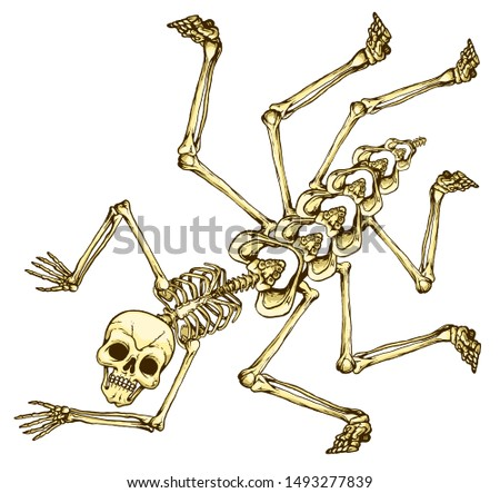 Human bones.  The human skeleton is like a spider.  Devilish creation.  Abstract monster on a white background.
