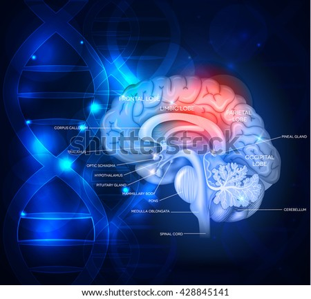 human brain abstract scientific