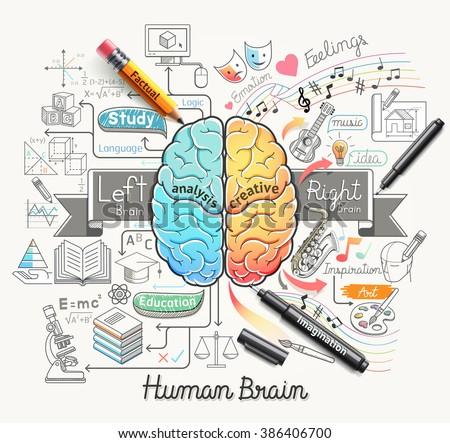 human brain diagram doodles