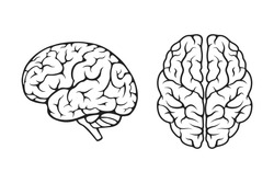 human brain icon set. side and top view. isolated vector mind, psychology and neurology symbol