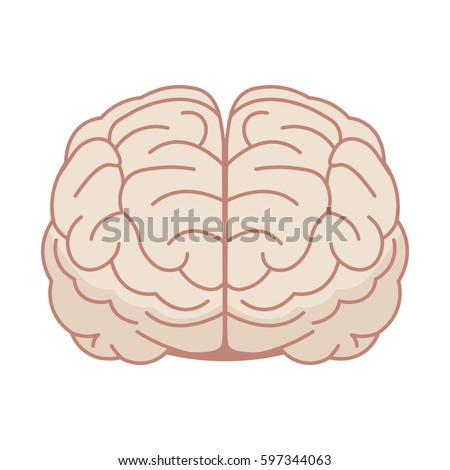 Human brain in flat style. Vector illustration. Front view