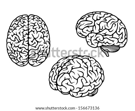 Human brain in three planes for medical, genetics and healthcare design or idea of logo