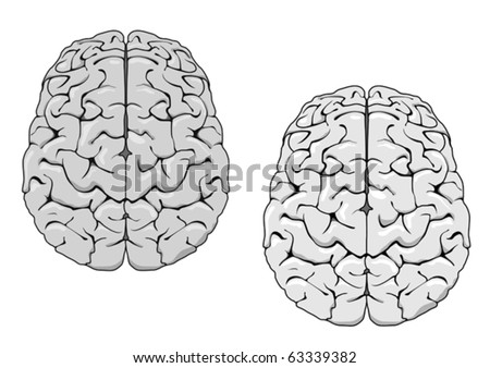 Human brain isolated on white as a concept of medicine. Jpeg version also available in gallery